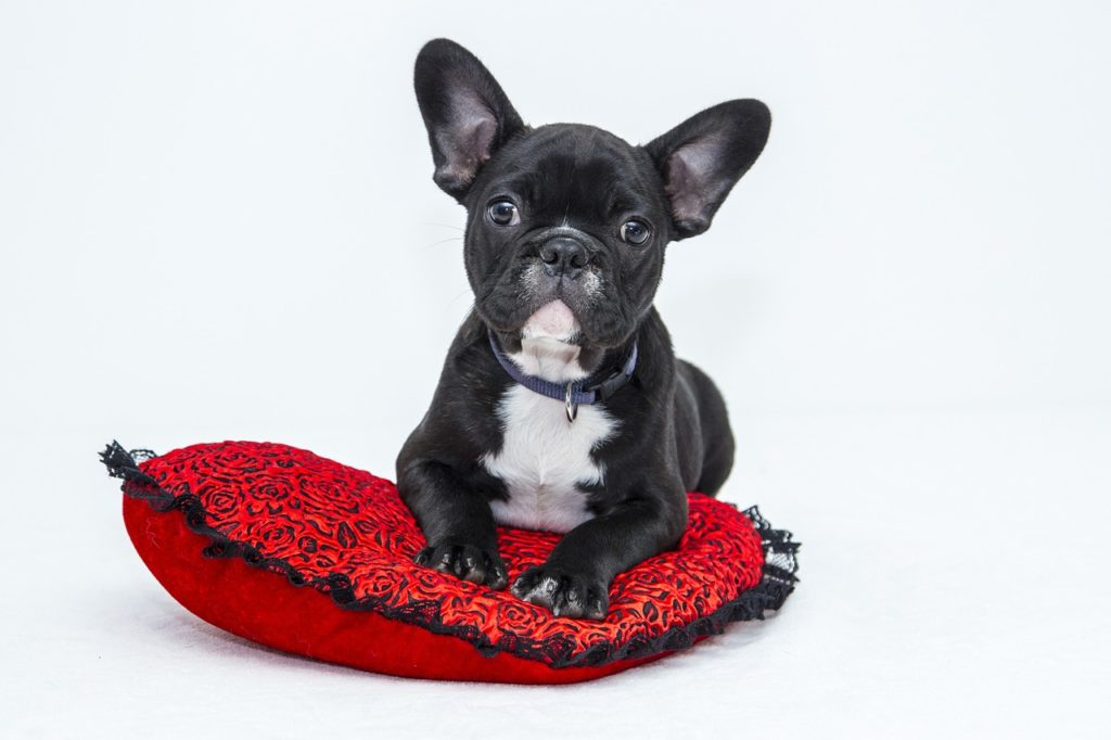 Pampered Pets, A Growing Trend